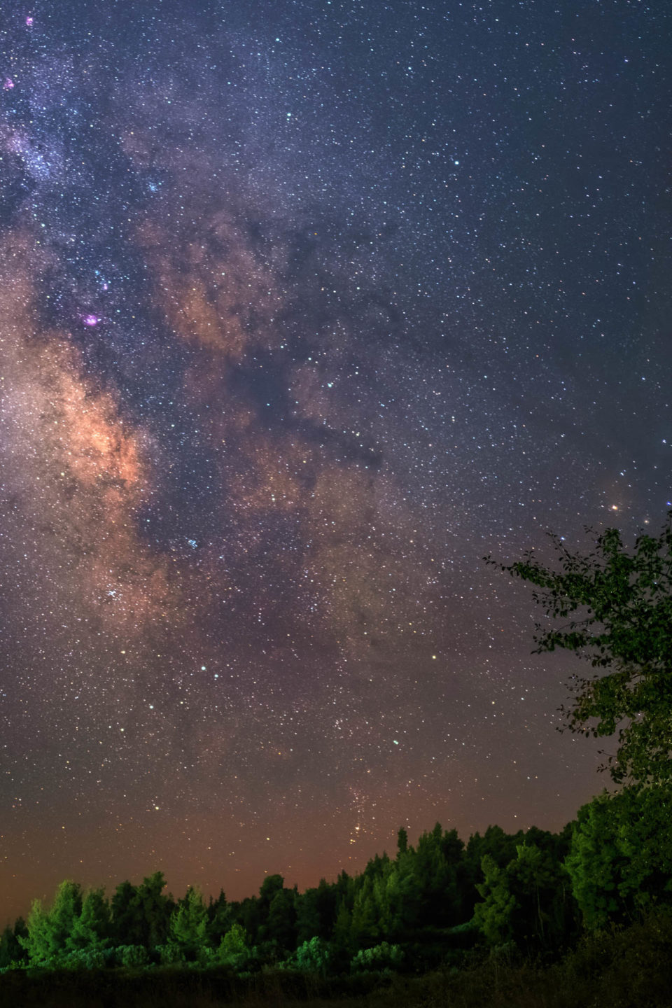 Milky Way Over A Forest